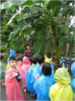 """""""Rain, rain, go away……"""" As we had some morning drizzles, the children wore ponchos while touring the garden."""